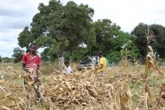 Field activities 8