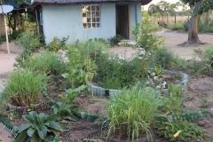 Gardening 13