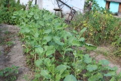 Gardening 22