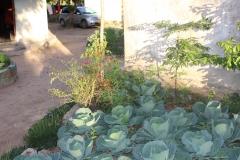 Gardening 8